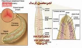 بازار فروش زالو و مرجع اصلی آموزش پرورش زالوی طبی سبز در ایران