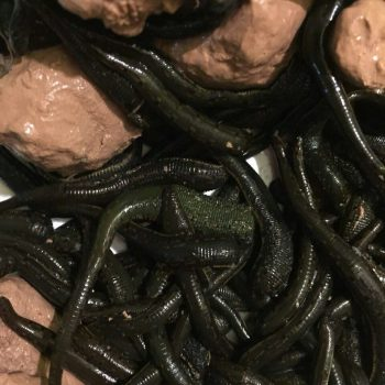 قیمت فروش انواع زالوی طبی سبز در ایران